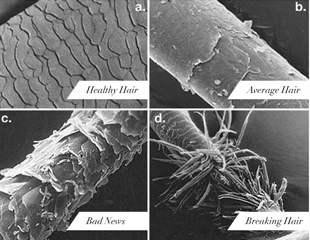 progression of hair damage under a microscope.